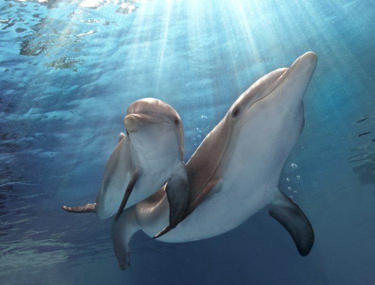 dolphintale22